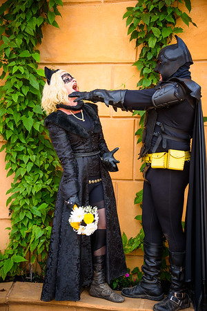 Bat and Cat
