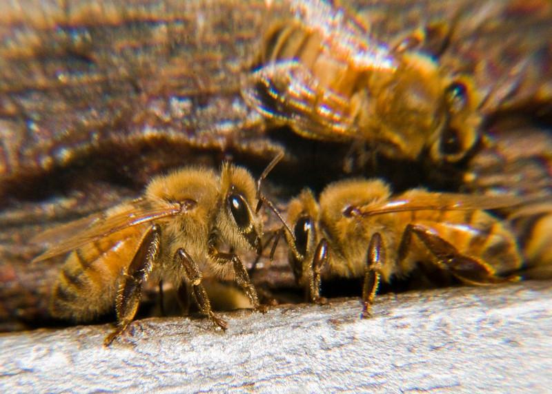Bees eye to eye .jpg