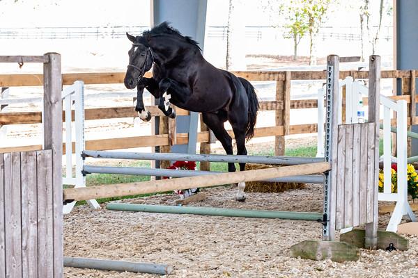 Horse 6 - Louie