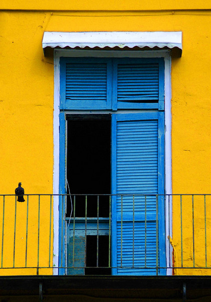 Bird on Rail blue yellow.jpg