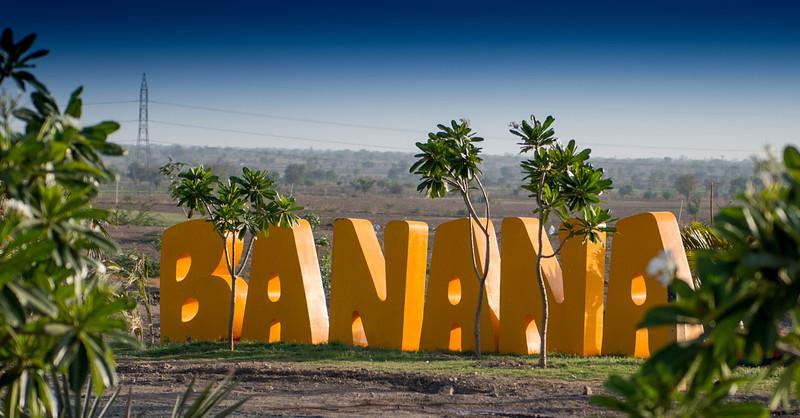 Banana Location-70.jpg