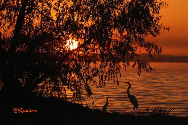 Sunrise Braunig Lake IMG_0627.jpg