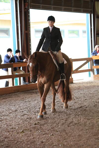 Green Hunter Under Saddle