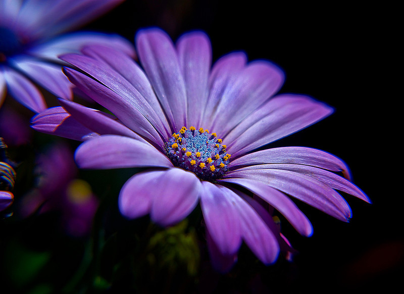 Purple flower 1   .jpg