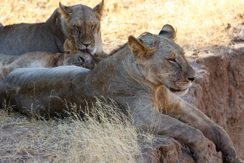 Kenya 2015-00375.jpg