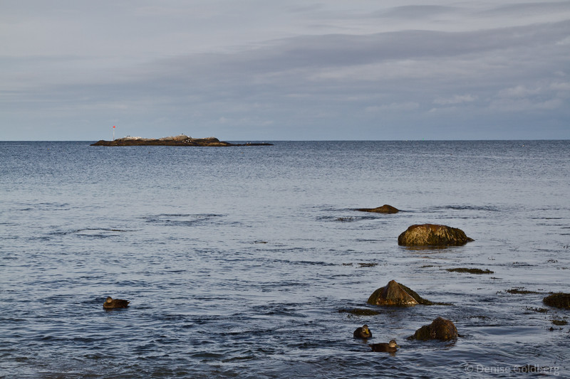 peaceful ocean view, Rockport, MA