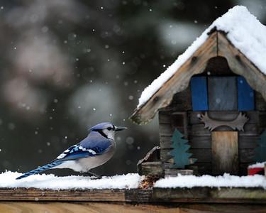 Winter Birds 120917