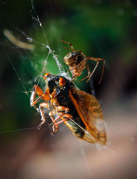 Death of a Cicada 2.jpg