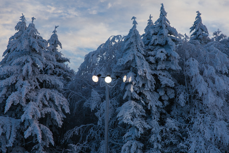 2020-02-01_SN_KS_Frosty Trees-0763.jpg