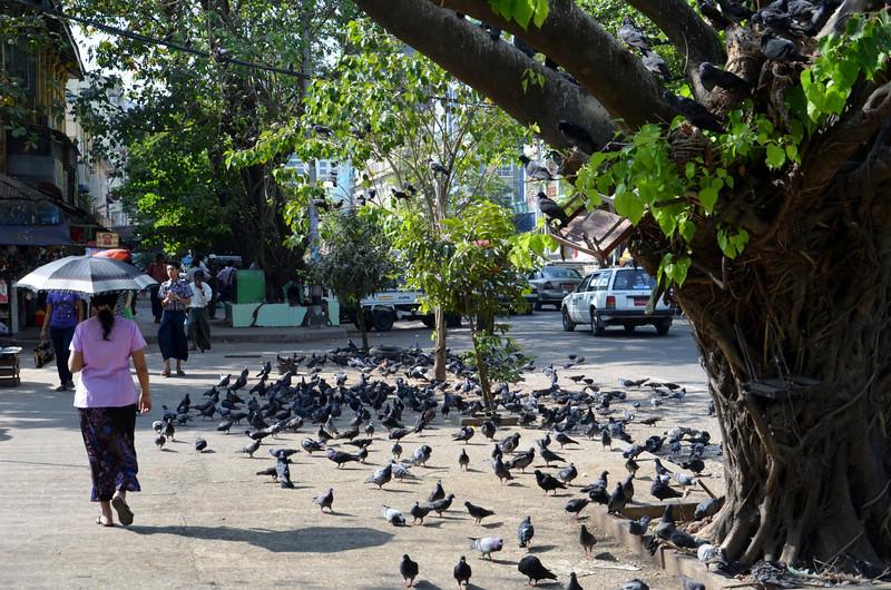 DSC_5168-street-pigeons.JPG
