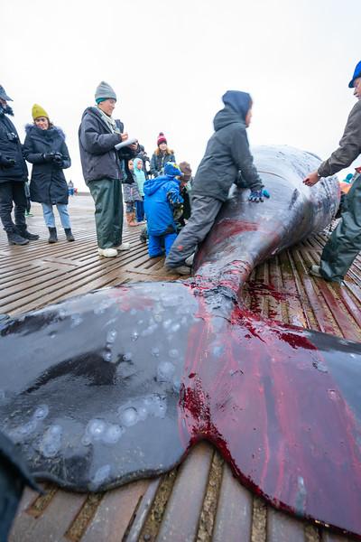 Utqiagvik Whaling-7015-Juno Kim-nw.jpg