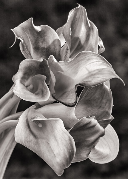 callas-late-afternoon-02.jpg
