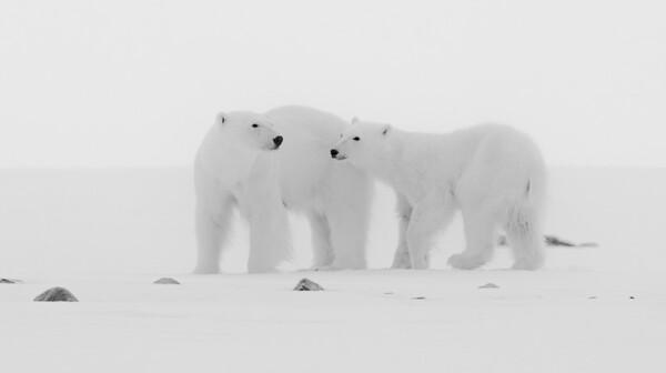 Svalbard-High Arctic B&W