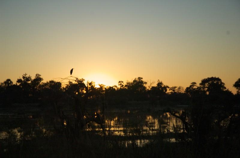 Chitabe, Okavango Delta - Leslie Rowley