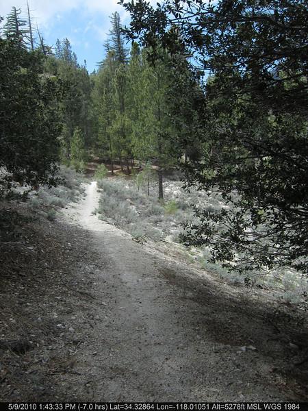 20100509157-Trail Recon, Silver Mocassin, West of Chilao.JPG