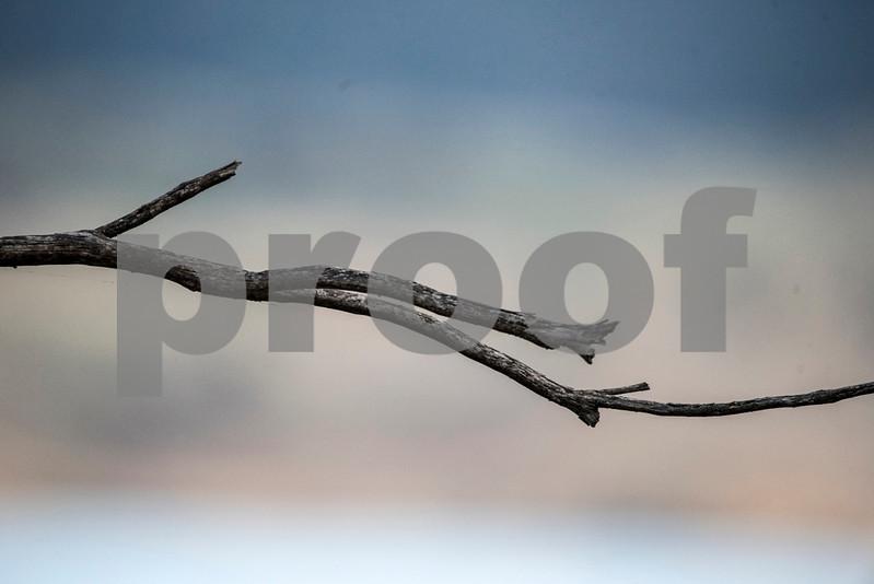 funky branch.jpg