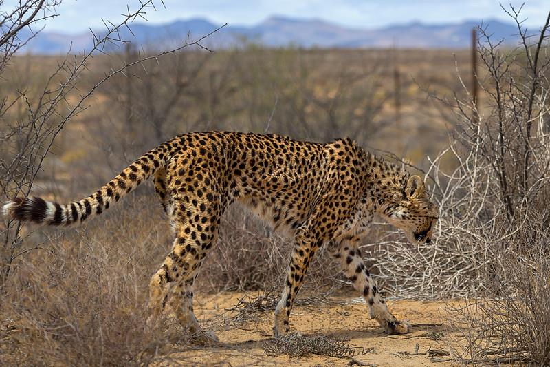 Inverdoom Game Reserve Western Cape, South Africa