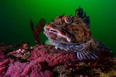 Edmonds Underwater Park 2015-02-22