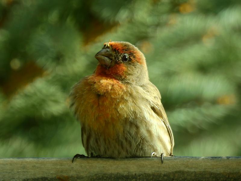 birds (144).JPG
