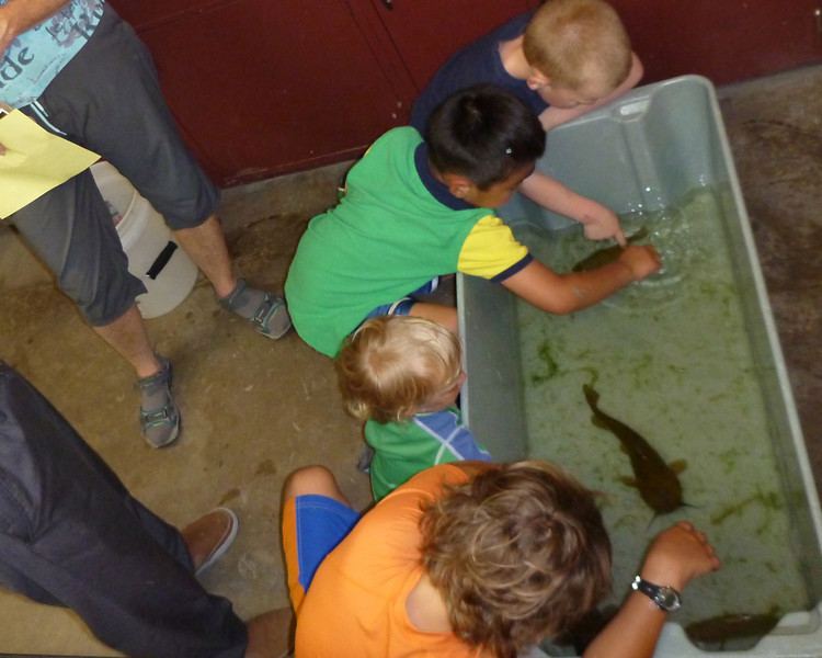 """One popular feature of the Wet Lab was the """"touch tub."""" Children, especially liked the opportunity to feel the difference between scaly bass and smooth bullheads."""
