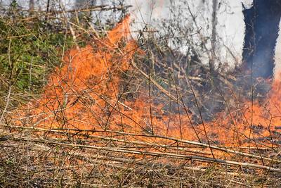 2020.04.11 Mastic Beach Bamboo Fire In the Yard  Allanwood Dr