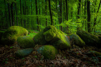 Skogsmiljø