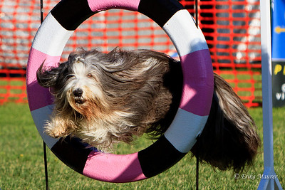 Agility Events