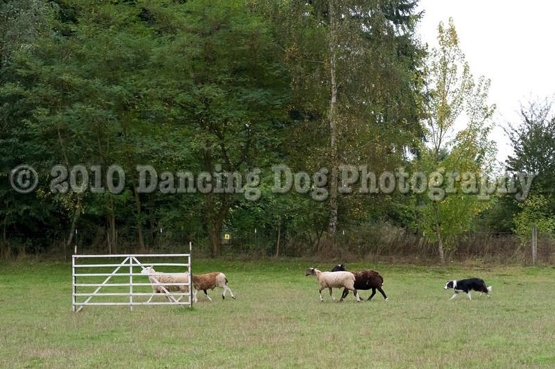 PacNW_HT_Sun_Sheep-6437