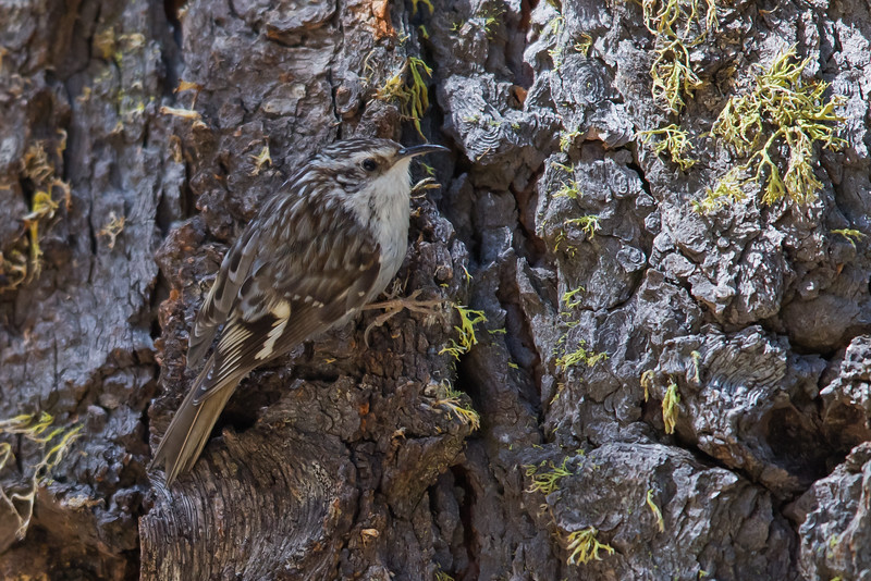 - Wuksachi Lodge, Sequoia National Park, CA, USA