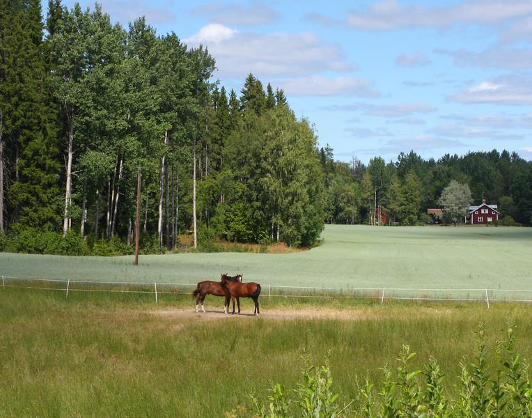 Hästar2.jpg