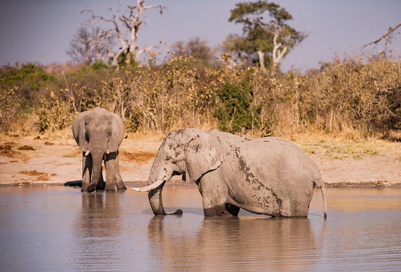Botswana_June_2017 (4831 of 6179).jpg