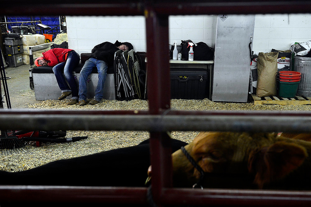 . Aubree Beenken and her uncle, Tyler Beenken, who just drove in from Iowa, take a nap while unloading in preparation for the National Western Stock Show at the complex on Wednesday, January 9, 2012.