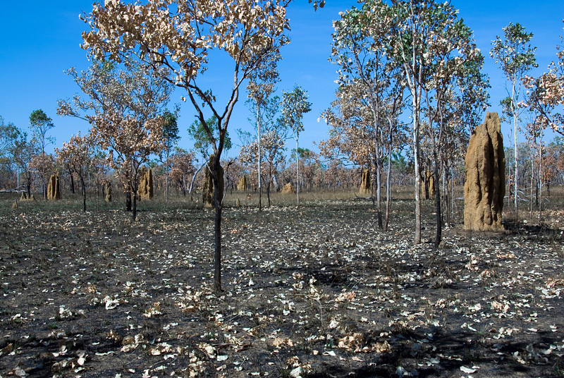 Termite Mounds, Kakadu National Park - Northern Territory, Australia