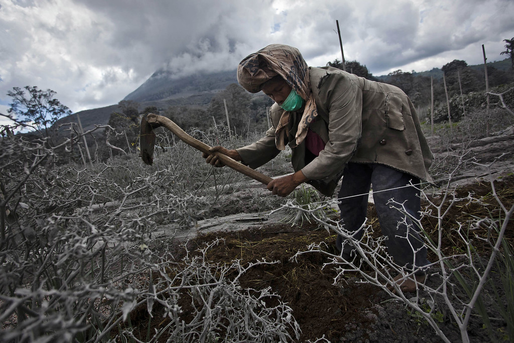 . A woman works in her field which has been covered by ash from eruption of mount Sinabung in Sigarang Garang village on November 25, 2013 in Karo district, North Sumatra, Indonesia. (Photo by Ulet Ifansasti/Getty Images)