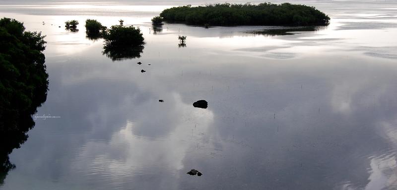Mangroves 2012