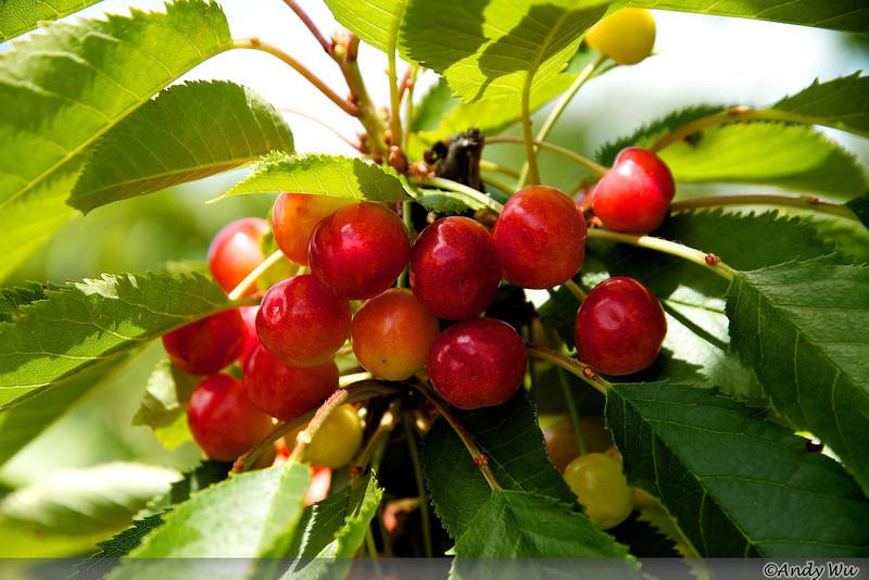 may_28_2011_ 59.jpg