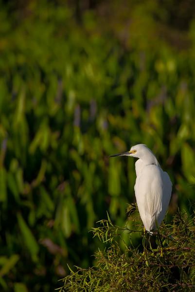 white bird (1 of 1).jpg
