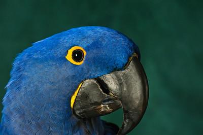 RHCC Exotic Birds 2010