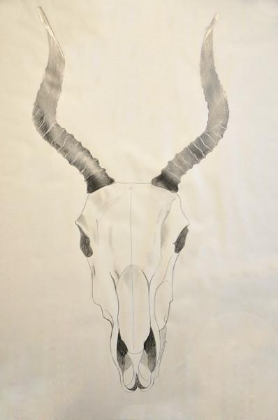 Skulls & Horns