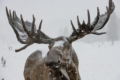 Moose Bear Plaza shots
