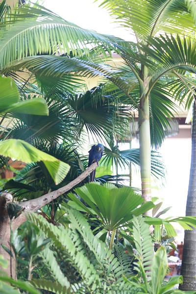 Kauai_D5_AM 221.jpg