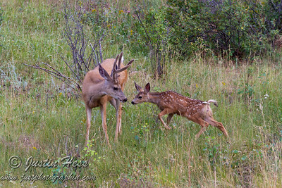 Buck and Fawn