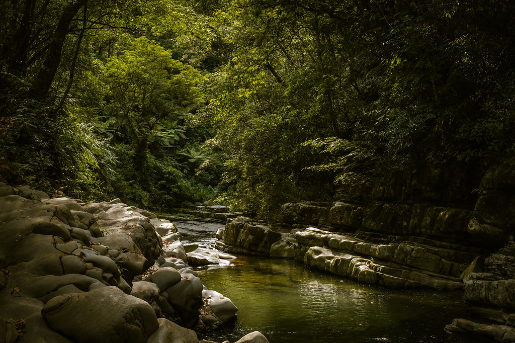 金瓜寮溪魚蕨步道 by 旅行攝影師張威廉 Wilhelm Chang