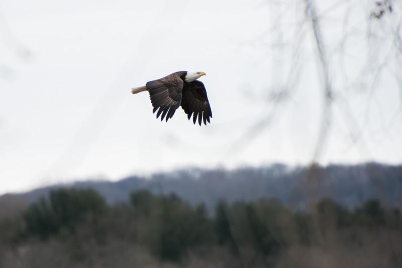 2014 WI River Eagles