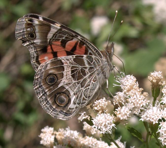 butterfly_5133162757_o.jpg