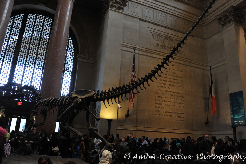 2013-12-30_AMNHMuseum@NewYorkNY_21.jpg