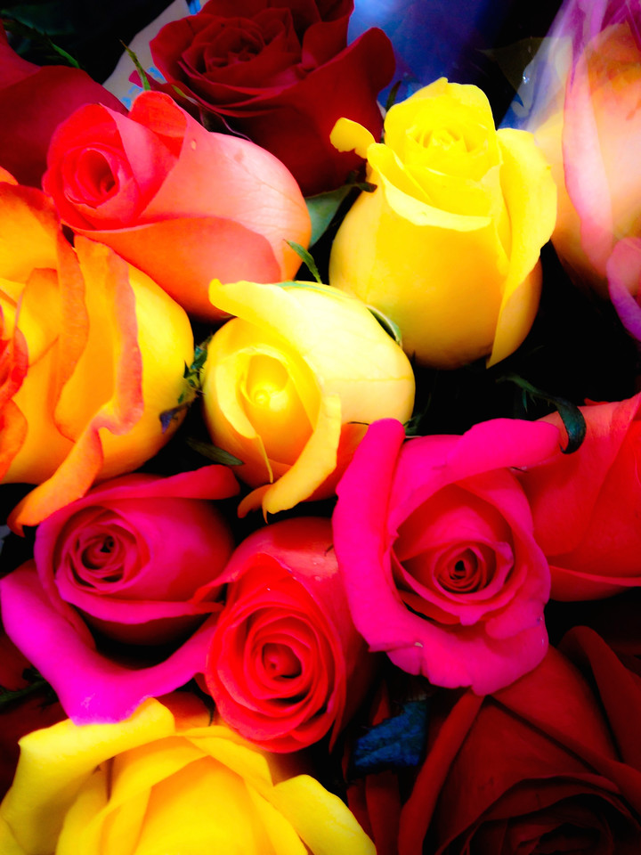 Colorful roses.