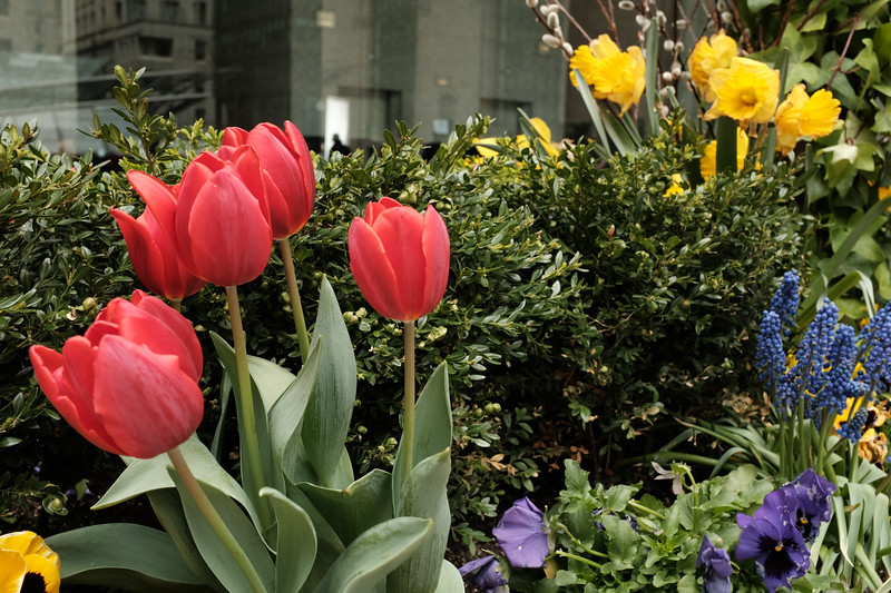 Flowers In Commerce Court