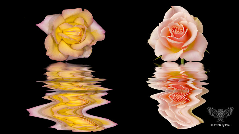 00900 Two Roses Flood 16x9.jpg