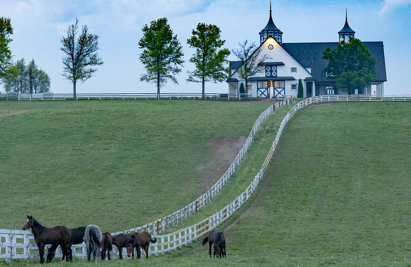 Manchester Horse Farm Lexington KY  April 25, 2019   010.jpg